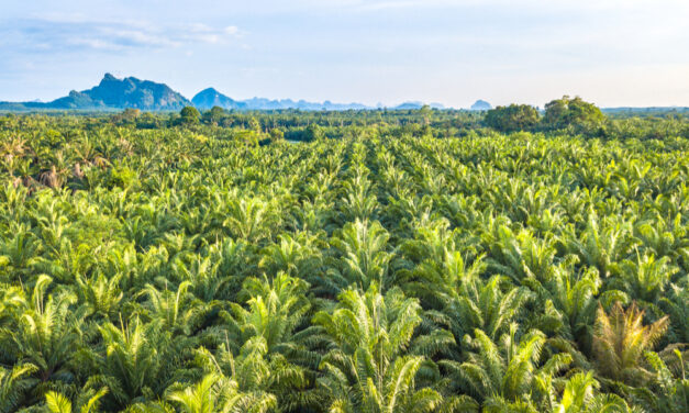 Unilever's approach to tackling deforestation using geolocation data